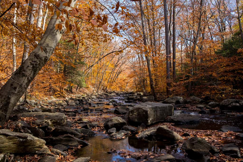 Black River - Hacklebarney Northern New Jersey Hikes